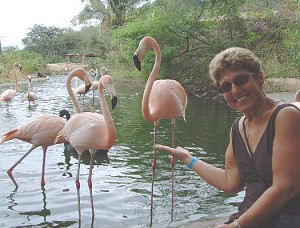 Flamingo Carol Zoo